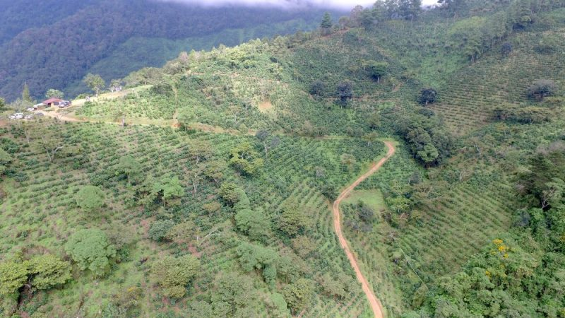 Joya Grande coffee farm, Guatemala.